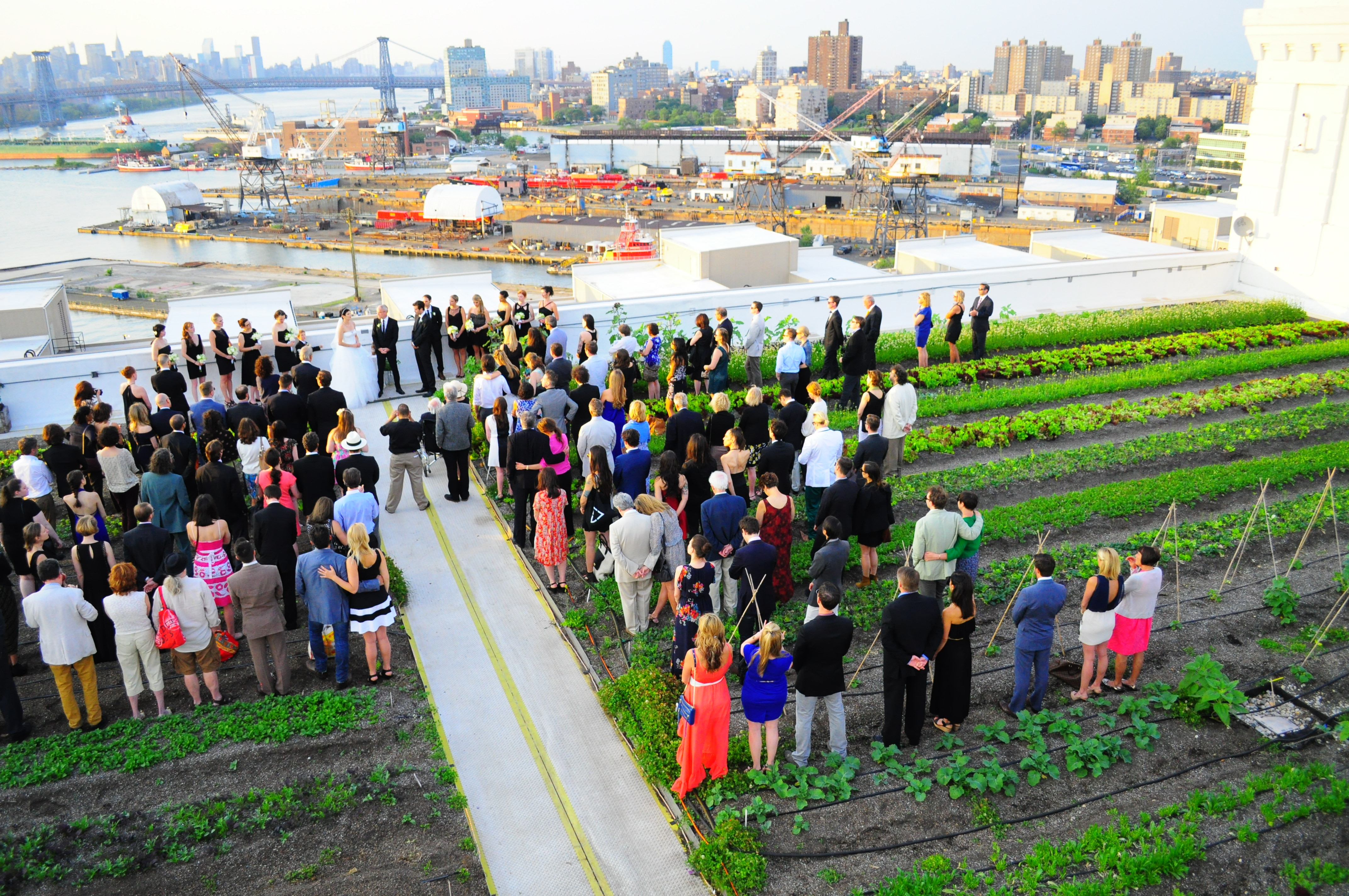 Image result for brooklyn grange brooklyn ny